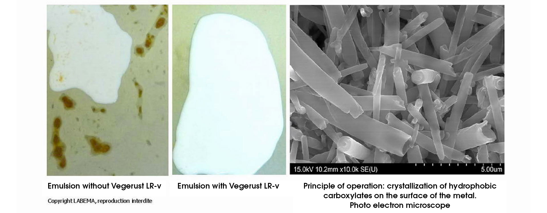 VEGERUST-LR-v-Labema-future-is-vegetal